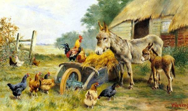 Fowl Talk